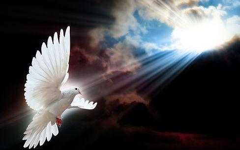 White-Dove-2.jpg
