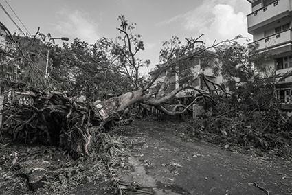 Uw omgevallen boom berokkent schade bij de buren...