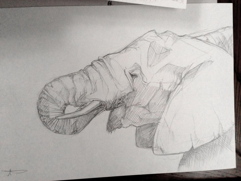 160203_Bigger Elephant.jpg