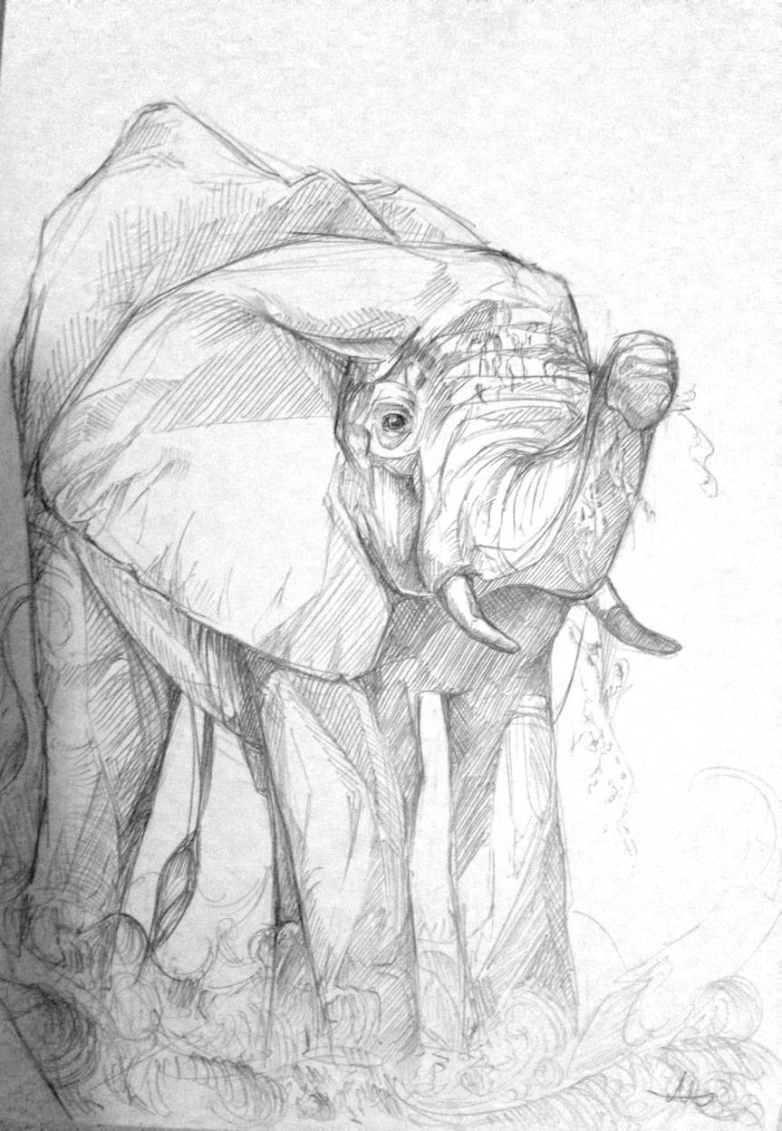 160203_Elephant Calf.jpg