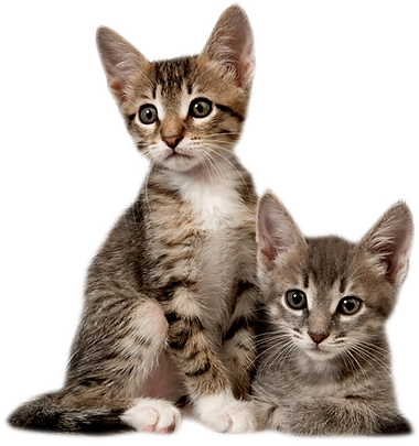 5-2-kitten-picture.png