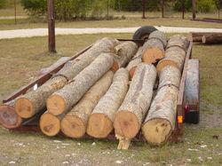 logs, ash58.jpg