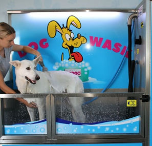 dogwash_edited.jpg