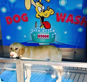 dog-wash_edited.jpg