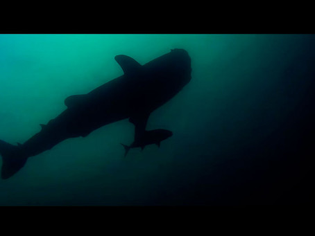 Moügli respira bajo el agua en su nuevo videoclip