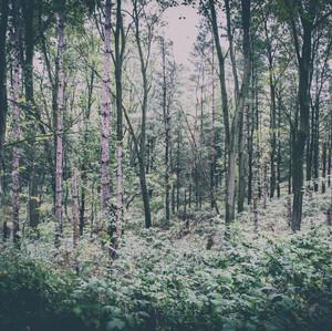Hamilton Trail 1.jpg