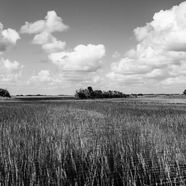Everglades Florida.jpg