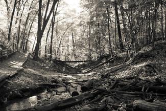 Toronto ravines
