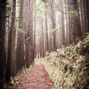 Azores Parc Florestal 2.jpg
