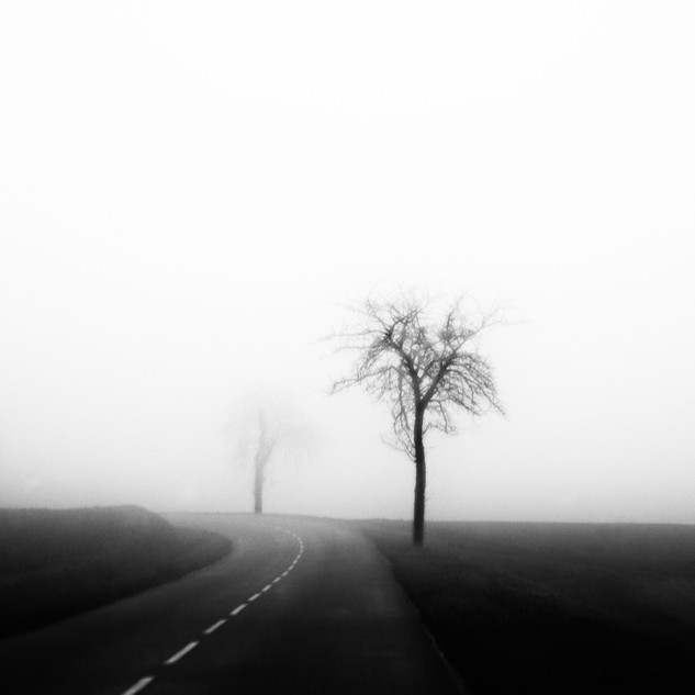 foggytree.jpg