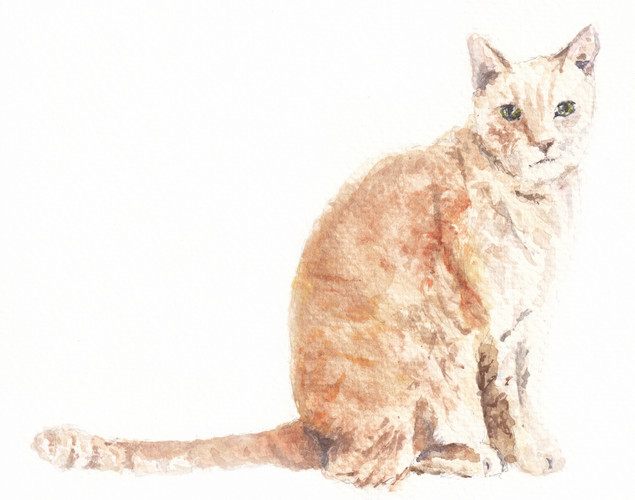 tan cat.jpg