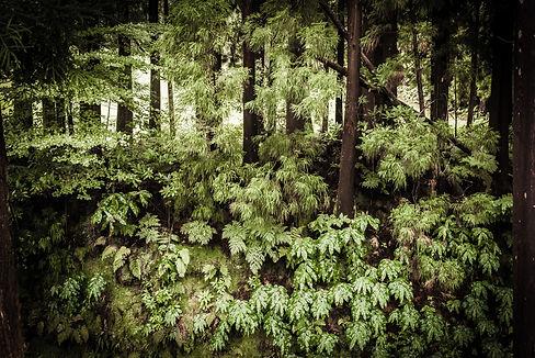 Azores Parc Florestal.jpg