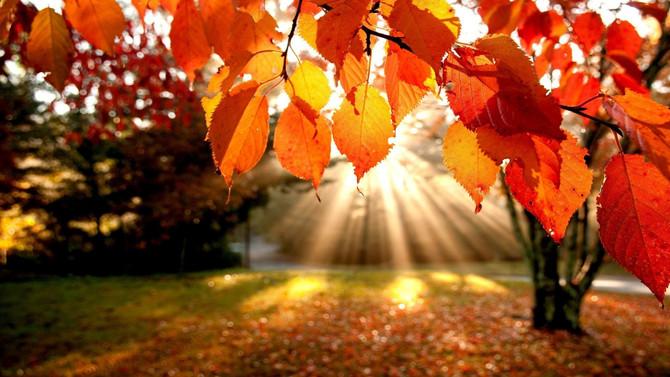 Balance Yin & Yang this Autumn