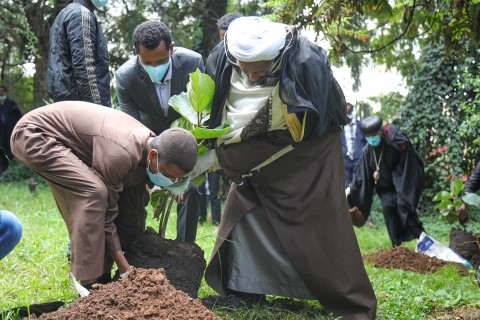 Group of Men Planting 3