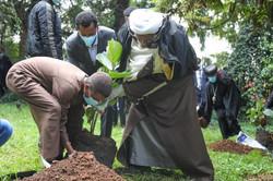 Group of Men Planting 3