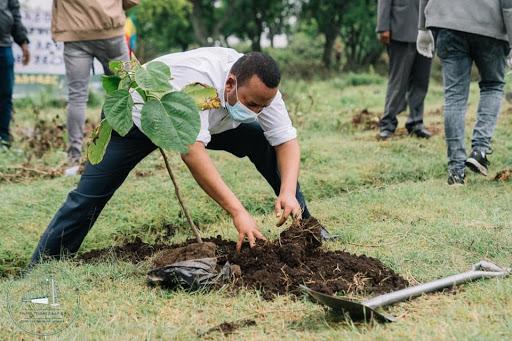 PM Abiy Ahmed Planting 2