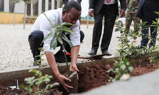 PM Abiy Ahmed Planting 3