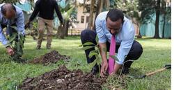 PM Abiy Ahmed Planting 1