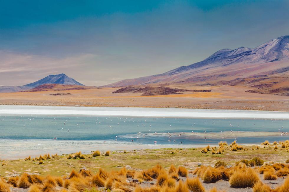 Deserto Atacama Passaros.jpg