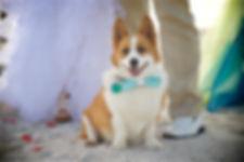 Sarasota wedding photography, Florida beach weddings, wedding, weddings, Siesta Key Beach weddings, wedding photographer