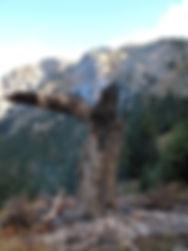 800px-Tree_struck_by_lightning.jpg
