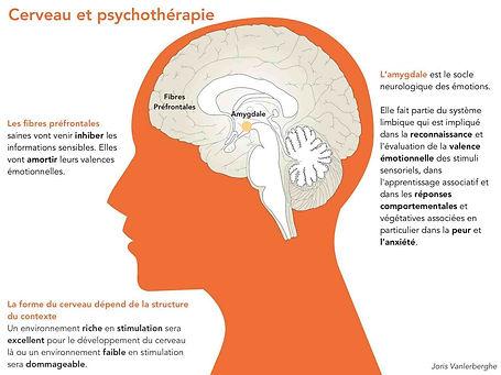 cerveau-et-psychotherapie.jpg