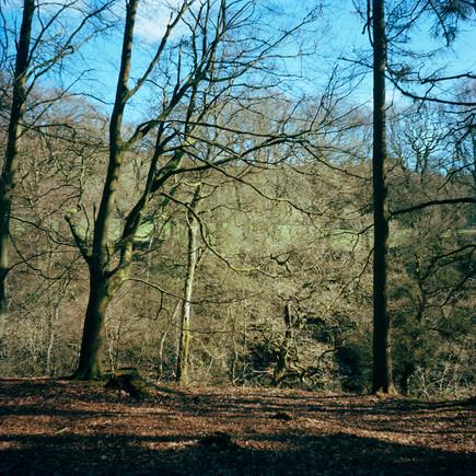 The Strid Wood.jpg