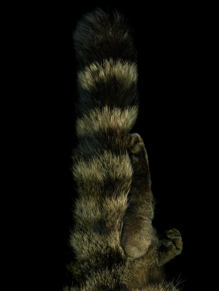 wildcat©LizaDracup.jpg