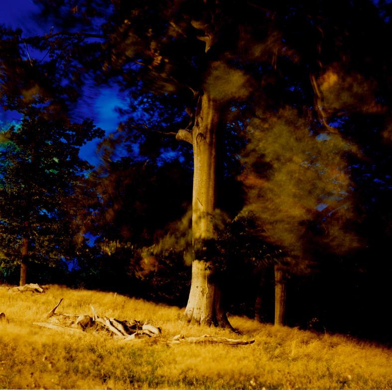 20.Sharpe'sWood.Untilted2007©LIzaDracup.
