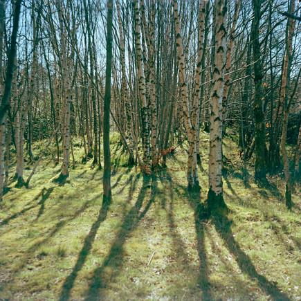 The Strid Wood II.jpg