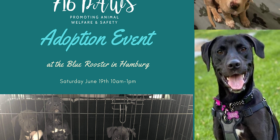 Blue Rooster Adoption Event