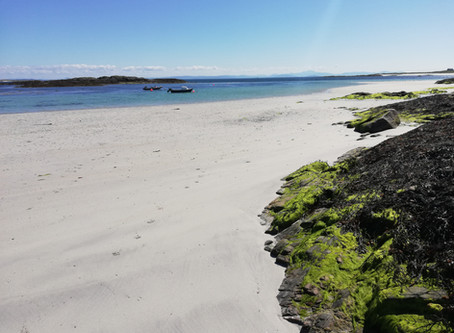 The belted beauty on Tiree… a rare sight.