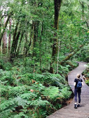 Best-hike-new-zealand-waipoua-17.JPG