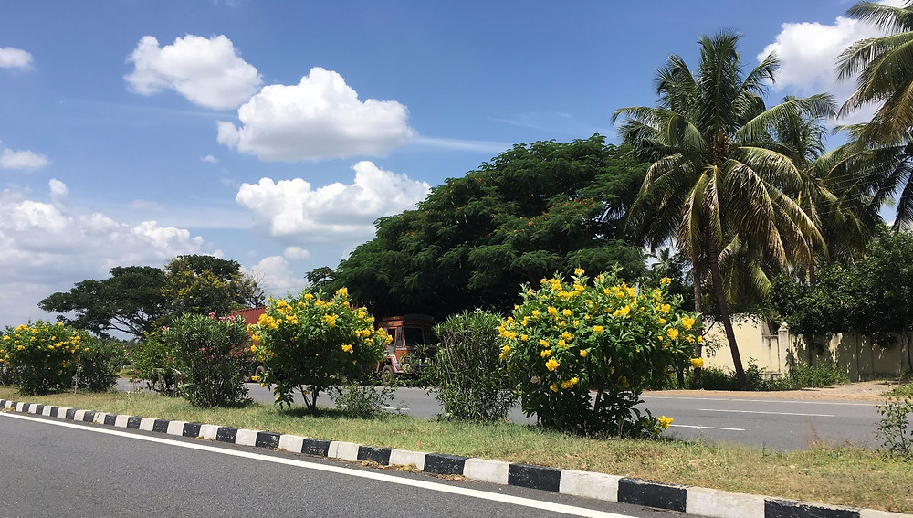 Yellow plumerias, palm trees, banyans and sunny skies.