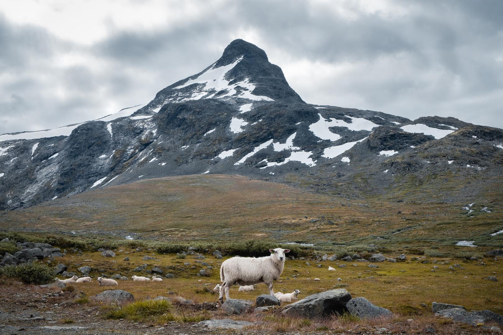 Jotunheimen Norway
