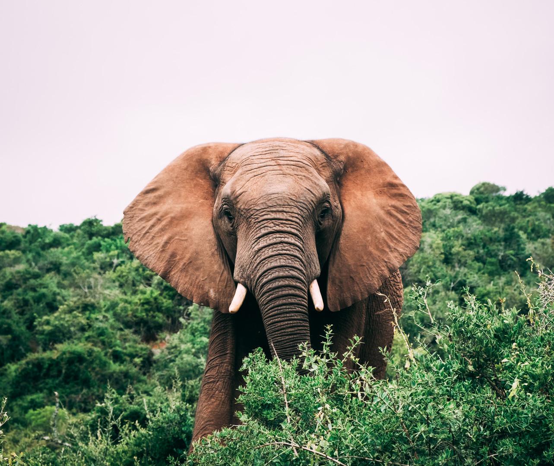 Elefant Surprise