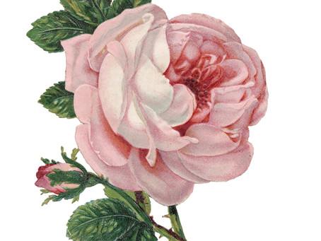 A Simple Vintage Rose