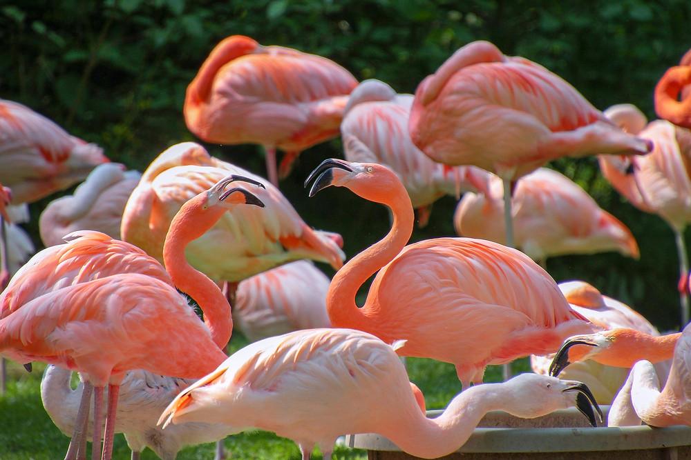 flamingos custom party invitations just fine designs on zazzle