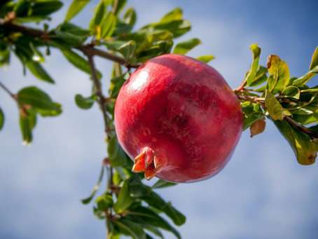 Pomegranates, Personal Gifts at Just Fine Designs