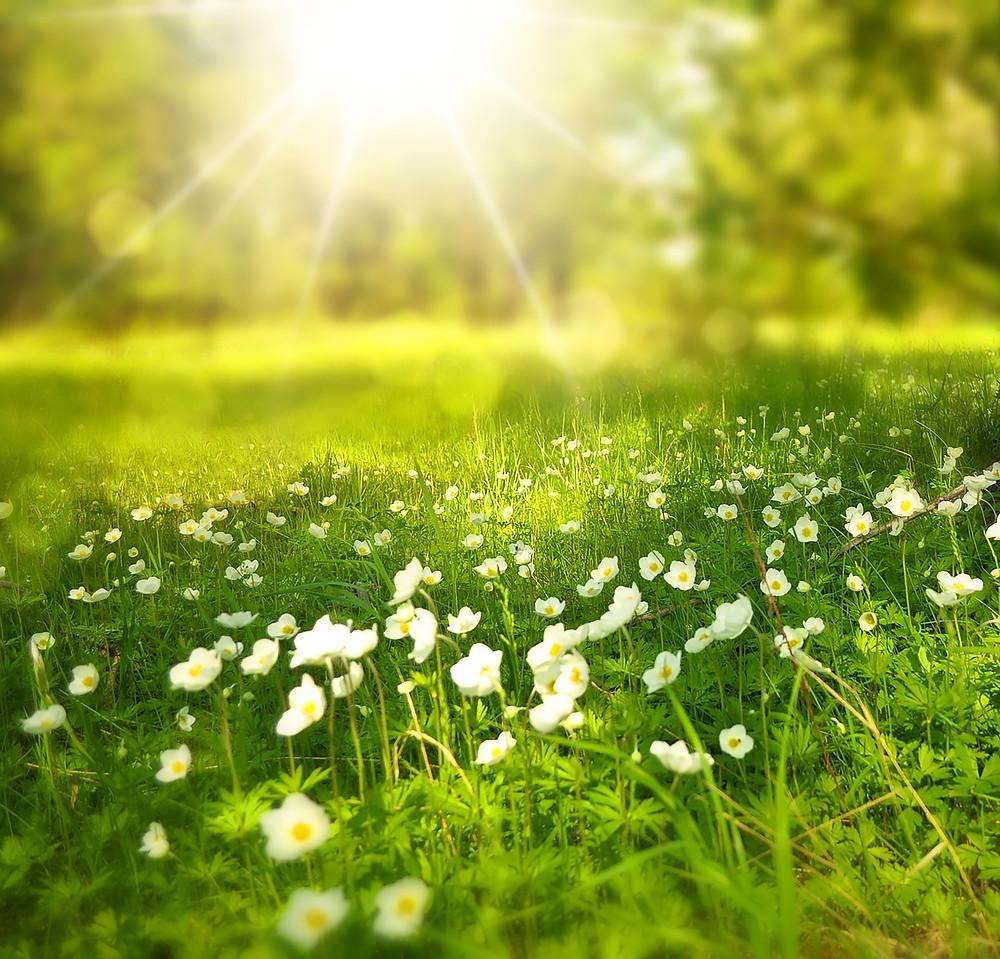 Spring Sunshine at Just Fine Designs