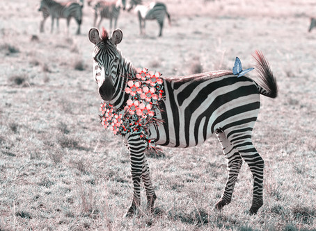 ​​A Floral Zebra? Why hasn't it been done before?