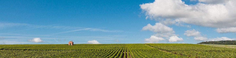 Wandelvakantie-in-Champagne-Ardenne.jpg