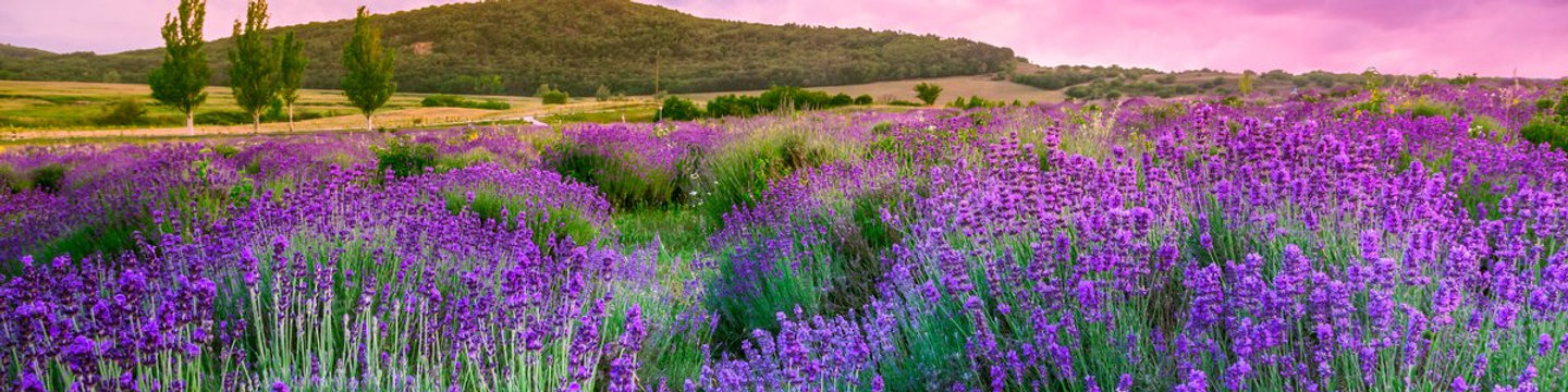 Wandelvakantie-in-Provence-Alpes-Cote-d-