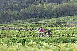 Fietsen wijngaarden.jpg
