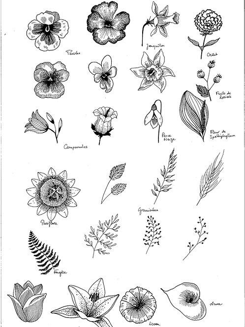 Reproduction Beaux-Arts -Planche Végétale I