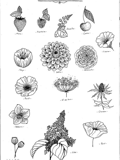 Reproduction Beaux-Arts -Planche Végétale II
