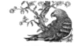 illustration noir et blanc Le Gris