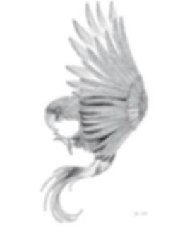 illustration noir et blanc Le Perroquet