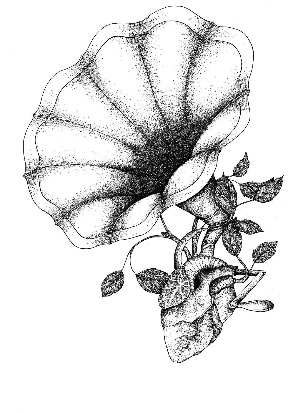 illustration noir et blanc L'Amour