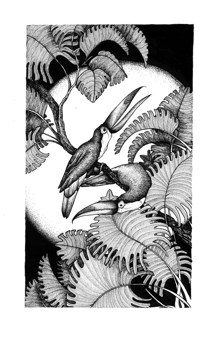 illustration noir et blanc Les Toucans